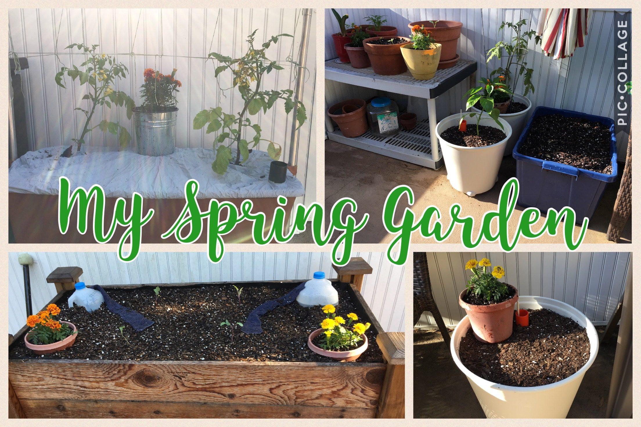 The Hopelessly Inept Gardener?